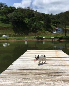 unnamed jpg   280x350 - Encrenquinhas Hotel Fazenda para pets