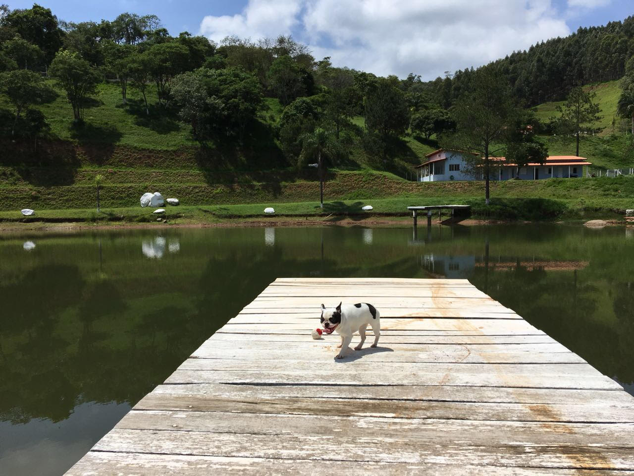 unnamed jpg   - Encrenquinhas Hotel Fazenda para pets