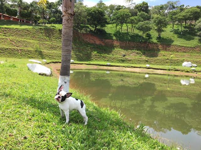 unnamed - Encrenquinhas Hotel Fazenda para pets